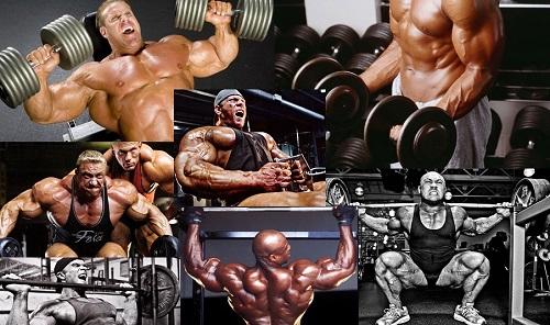 Rutinas por músculo