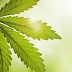 Cannabinoids for Autoimmune Disease