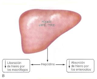 Educacion Diabetologica