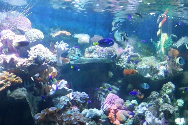 akuarium-seaworld-taman-impian-jaya-ancol-jakarta