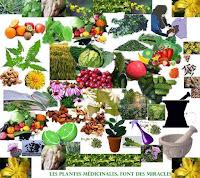 Plantes medicinales les plus connues