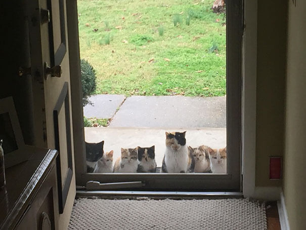 40 Heartwarming Pictures Of Animals - My Parents Started Feeding A Stray Kitten A Couple Weeks Ago. This Was Their Front Porch Today