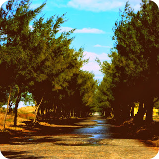 Balneário Gaivota: Alameda Verde