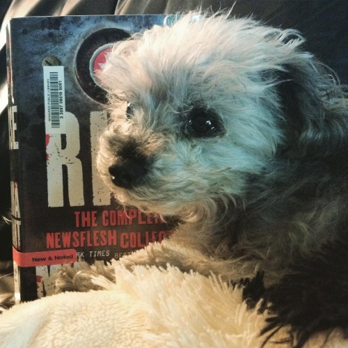 A fuzzy grey poodle, Murchie, lies slightly in front of a hardcover of Rise. The book's cover features the title in white against a background of a slightly darker grey than the dog.
