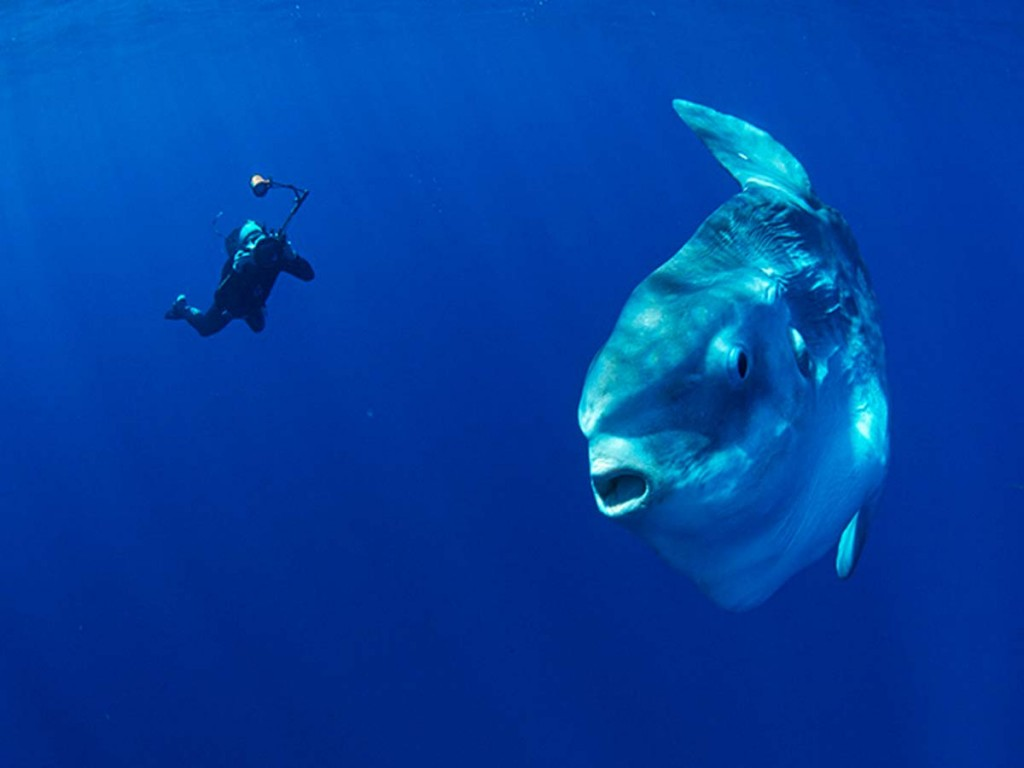 Biologija S Bedenko Morski Buco Bucanj