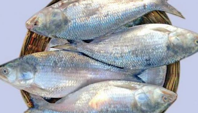 Learn to cook hilsa fish in 5 different ways