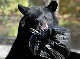 More Black Bear Issues in Bergen County. Tips for Morris residents who encounter bears during Fall outdoors season.