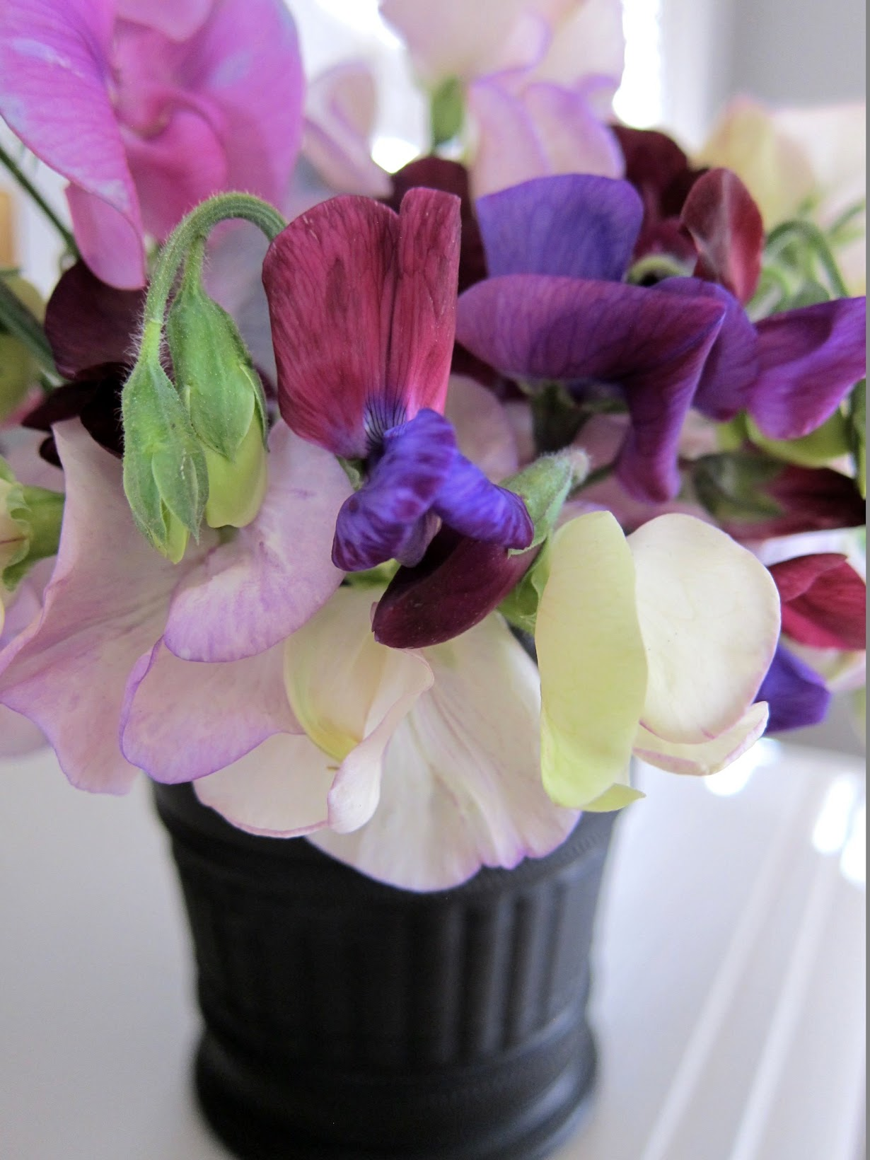 Chronica domus whats blooming inside the sweetest of sweet peas chronica domus reviewsmspy