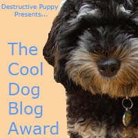 The Cool Dog Blog Award