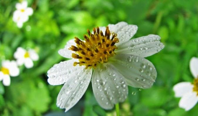 Nhung loai hoa dai dep 3