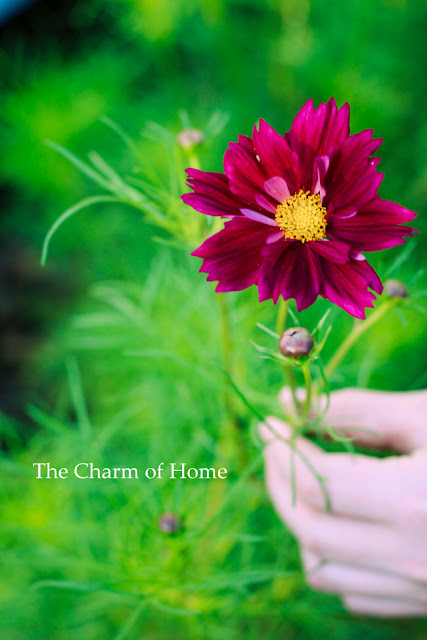 Zephaniah 1: Store Up Your Treasures in Heaven: The Charm of Home