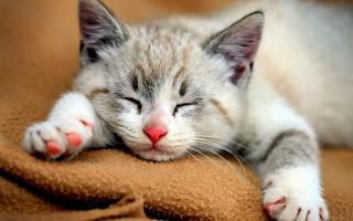 Ciri Khusus Kucing