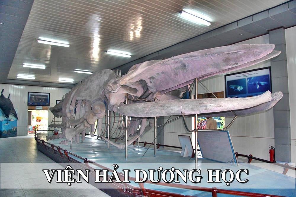 Xương cá voi Viện Hải dương học