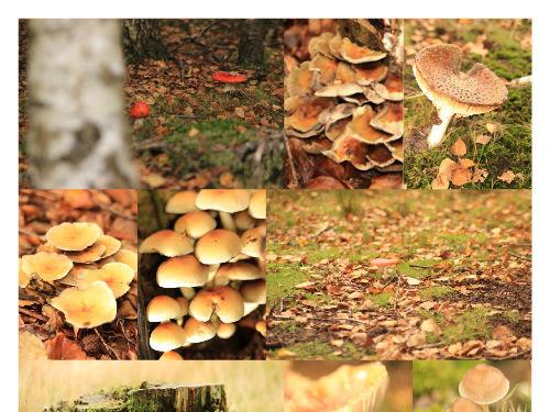 ღFotografie mijn levenღ #6 | Herfstsfeer