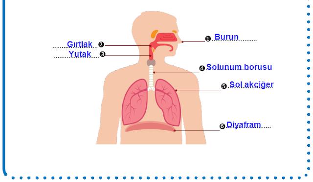 6. Sınıf Fen Bilimleri MEB Yayınları 77. Sayfa Cevapları