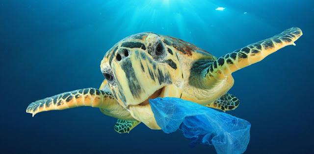RECICLAGEM DE PLÁSTICO: estão te enganando! Por que RECICLAR NÃO RESOLVE a poluição dos plásticos!
