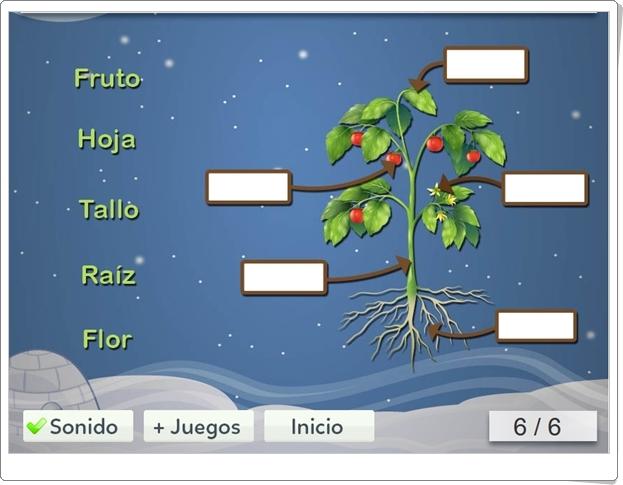 El juego de las plantas (Ciencias Naturales de Primaria)