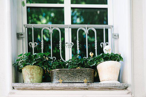 5 Amazing Health Benefits of House Plants