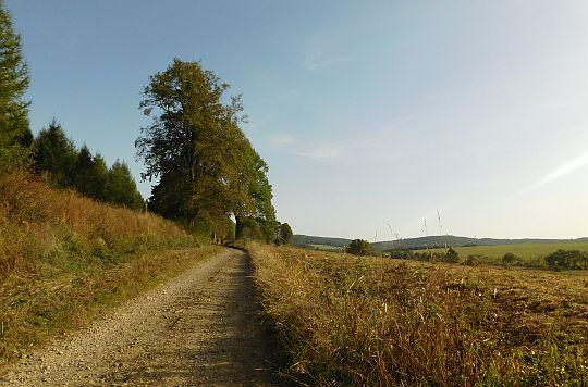 Czeremcha tuż przed cerkwiskiem. Widok w stronę Przełęczy Beskid nad Czeremchą.