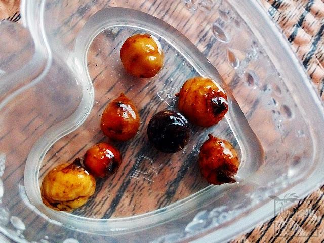 Migdał ziemny, tygrysi orzech, cibora jadalna (Cyperys esculentus) - informacje ogólne na temat rośliny, pochodzenia tiger nuts, wyglądu, uprawy, czy można uprawiać orzechy tygrysie w gruncie w Polsce? Jak wygląda bulwka migdała ziemnego? Jak rozmnażać, uprawiać, hodować, pielęgnować ciborę jadalną? Jak jeść, smak migdałów ziemnych.