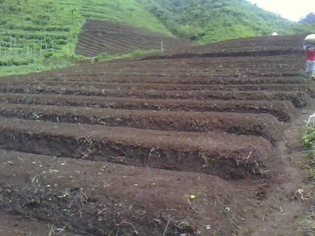 Pengelolahan tanah kacang tanah