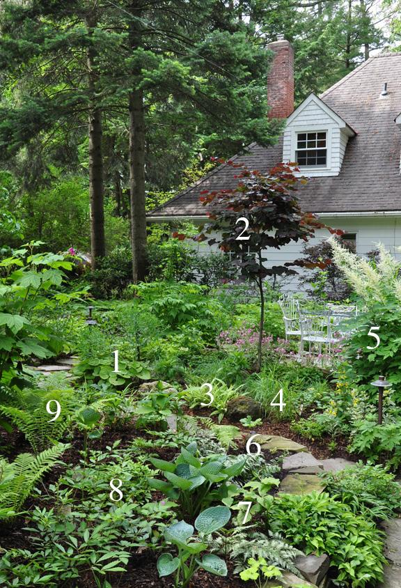 Three Dogs in a Garden: A Natural Shade Garden in Summer