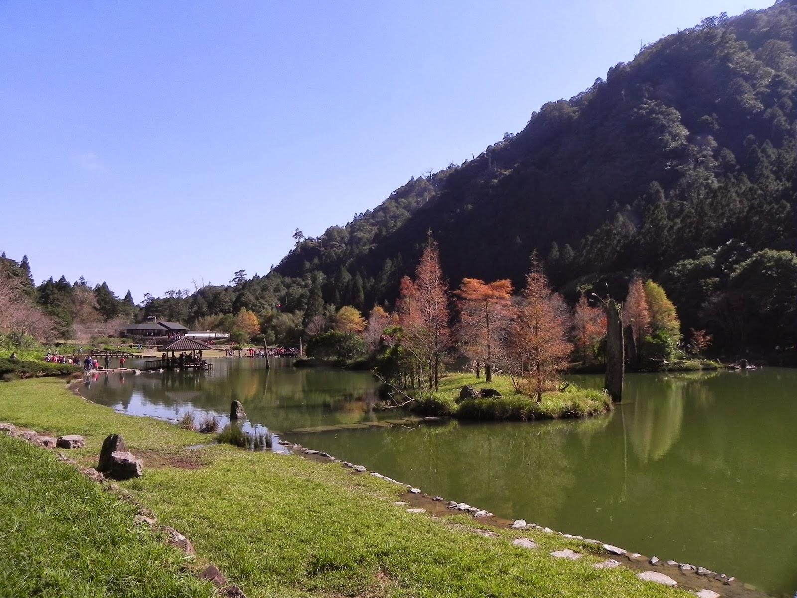 旅行的記憶: 2013年賞楓初體驗:明池湖與棲蘭神木園,絕美