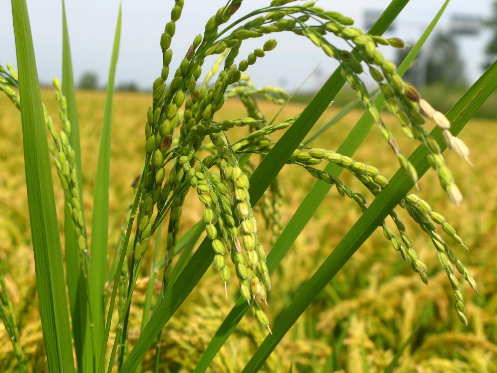 Rice Natural Sciences