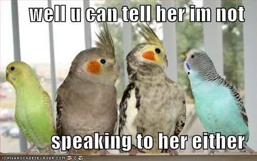 Funny Wallpapers: Funny Birds Pictures Wallpapers