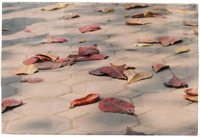 Chùm thơ lục bát về mùa đông hay khi gió đông về