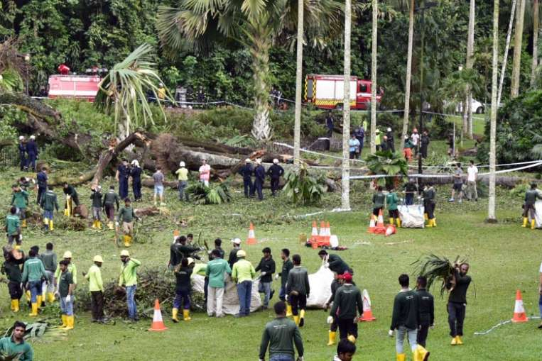 A huge Tembusu tree fell at the Singapore Botanic Gardens at about 4.30pm on Saturday (Feb 11).