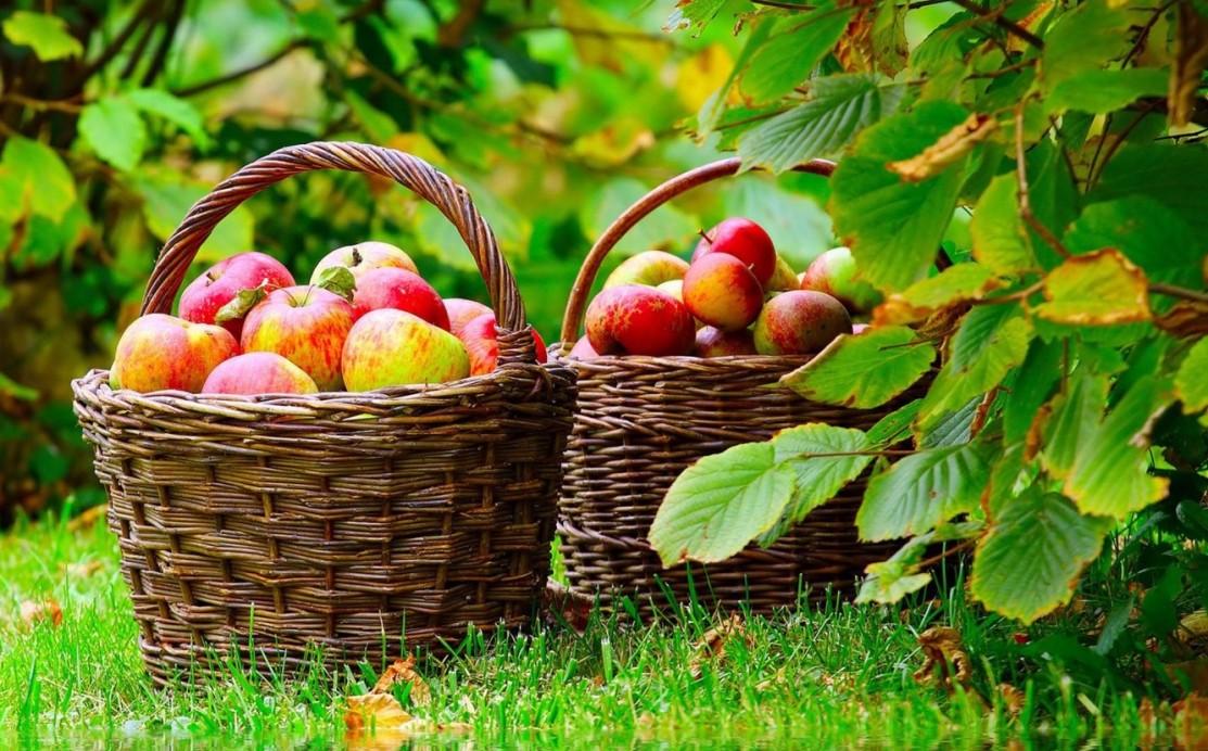 Organic Farming Hindi Article
