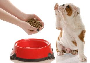 Urea en sangre perros