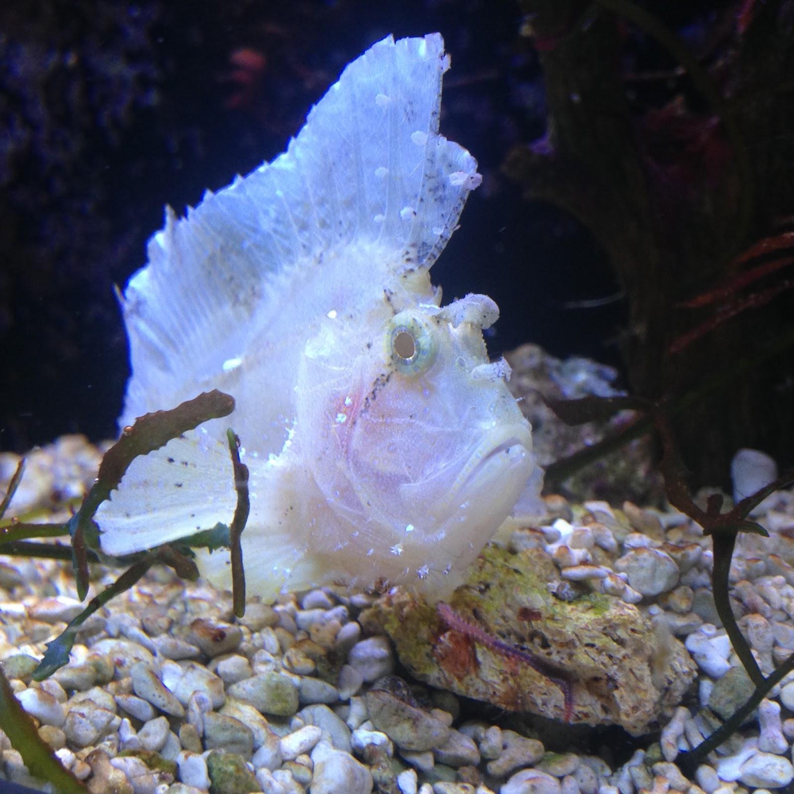 poisson feuille