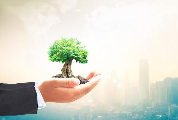 Ideas de Negocios Ecológicos y Rentables