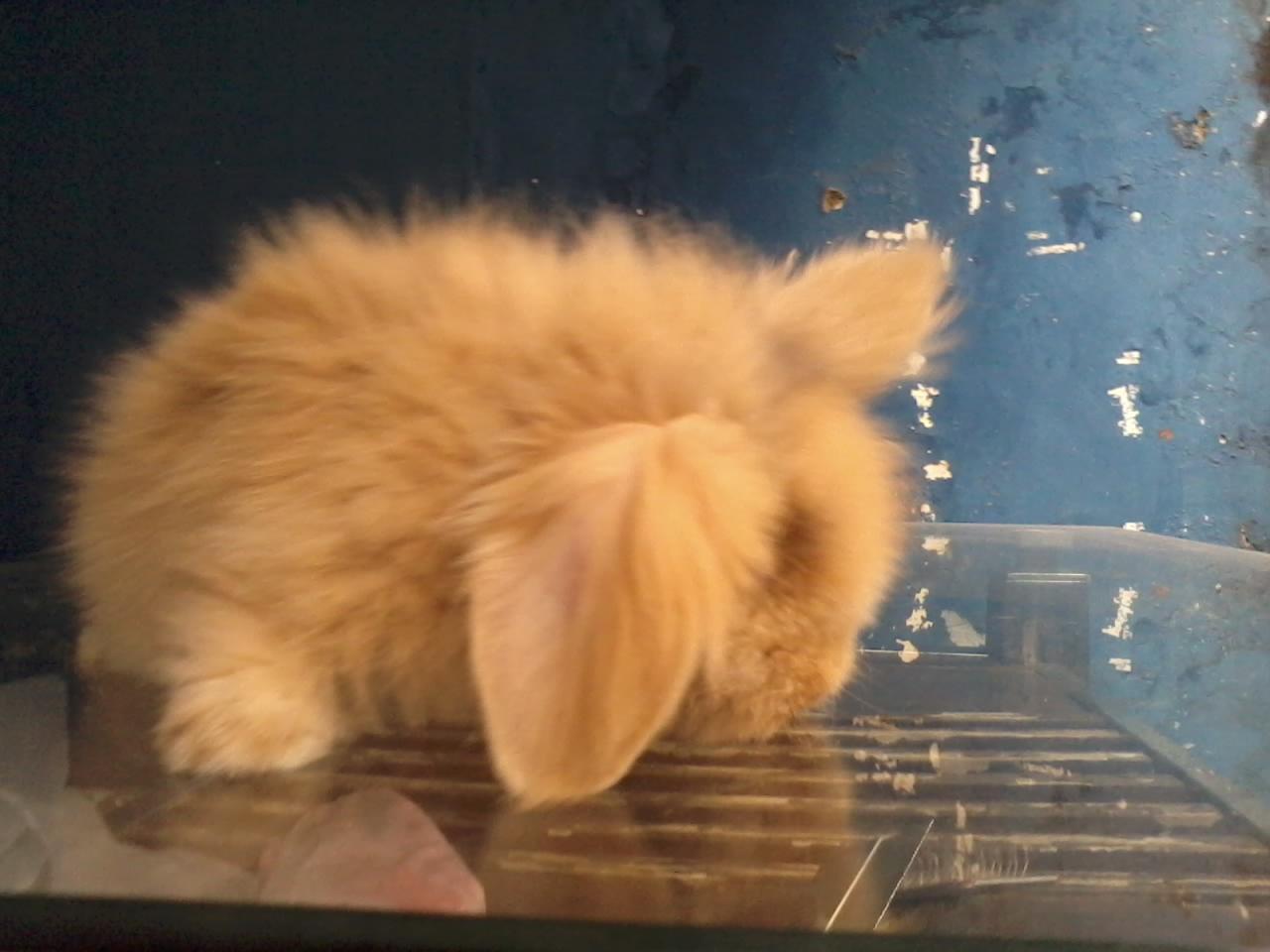 Makanan Yang Baik Untuk Anak Kelinci Anggora Uraniwa Rabbit