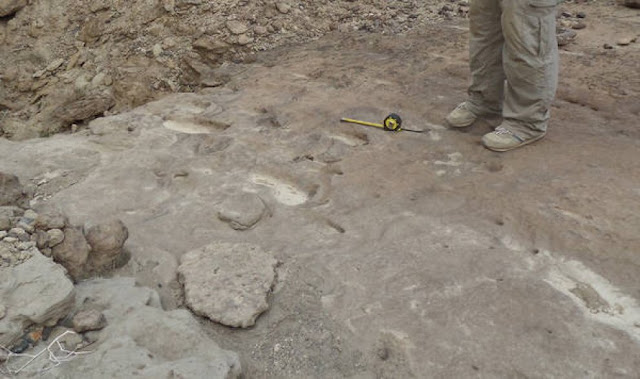 Earliest footprints of Homo Erectus found in Eritrea