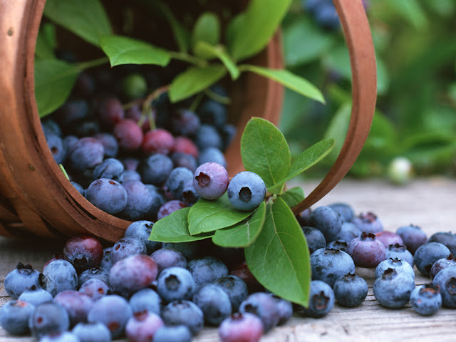 How to grow blueberries