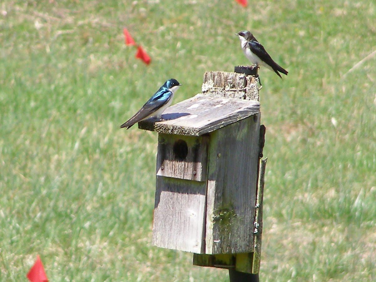 Hummingbird House Plans Bird In Everything Hummingbird Nesting Box