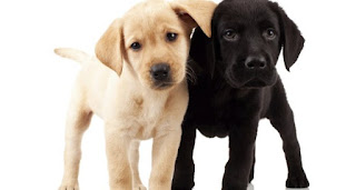 Puppy Care - Cuidado de cachorros de raza Big Dog