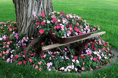 arrinho de mão no jardim com flores- reciclagem