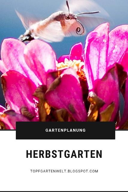 Herbstgarten - unverzichtbare Stauden und Einjährige für Insekten #herbstgarten #stauden #einjährige #insekten #schmetterlinge #gartengestaltung #gartenplanung #herbst #stauden #einjährige - Gartenblog Topfgartenwelt