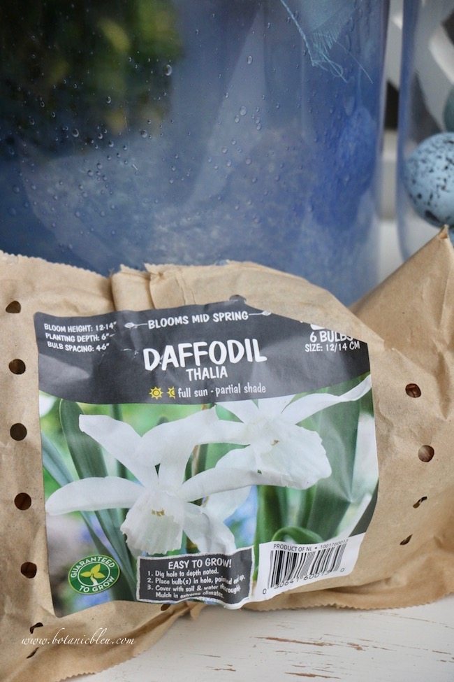 French gardener gift guide includes Thalia daffodil bulbs
