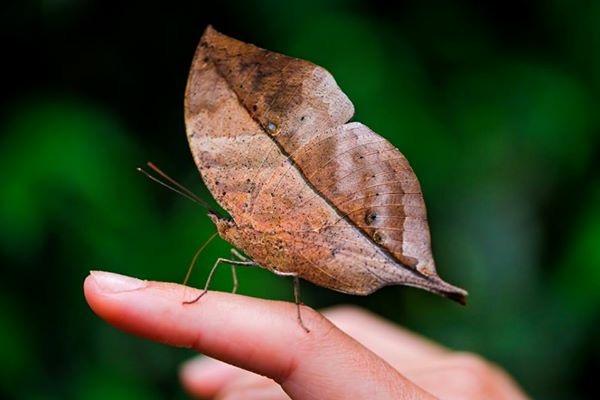Insetos e Invertebrados