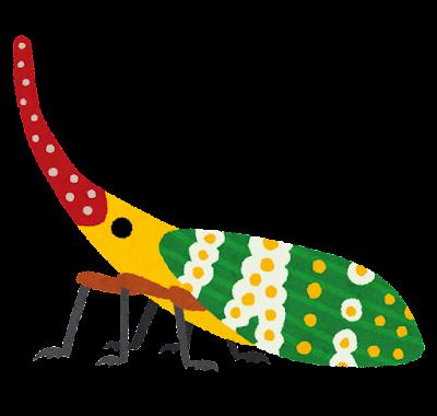 アカバナビワハゴロモのイラスト