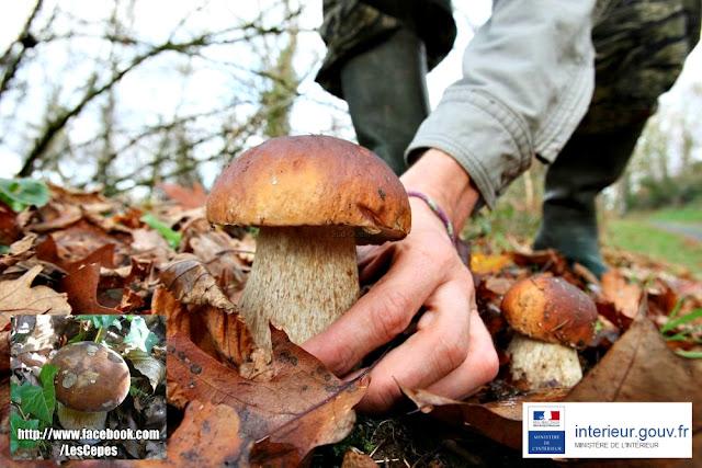 Législation de la Cueillette des champignons