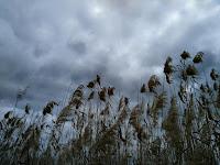 Nubes tormentosas.jpg