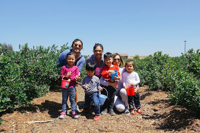 blueberry, berry picking, temecula, temecular berry co, san diego