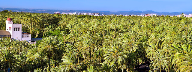 Elche Palm Grove
