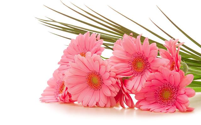 Foto roze bloemen